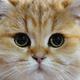Аватар пользователя oloxlo