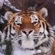 Аватар пользователя Zanyda91