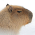 thecapybara69