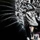 Аватар пользователя K.lion