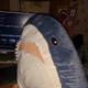 Аватар пользователя crc32