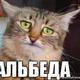 Аватар пользователя koteef