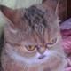 Аватар пользователя Dr.Gamoseb