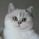 Аватар пользователя capsula