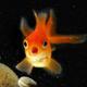 Аватар пользователя Goldenfish.666
