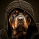 Аватар пользователя Ericsson567