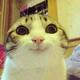 Аватар пользователя pupermega4el
