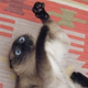 Аватар пользователя Mikarichan