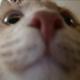 Аватар пользователя qotique