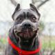 Аватар пользователя Dogfan