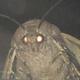 Аватар пользователя h2oEtoVoda