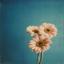 flower91