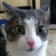 Аватар пользователя Reroiss