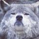 Аватар пользователя StuVirus