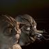 ArtofSculpture