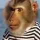 Аватар пользователя avso