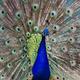 Аватар пользователя Pavlin83