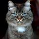 Аватар пользователя mr.yos