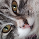 Аватар пользователя hahannushka
