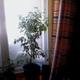 Аватар пользователя FIKUS79