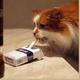 Аватар пользователя KykyshkaPyro