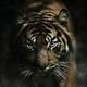 Аватар пользователя blackline475