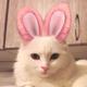 Аватар пользователя j527Te345