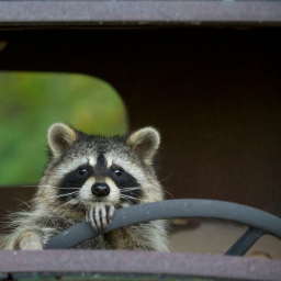 RaccoonReaper