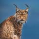 Аватар пользователя lynx3