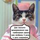 Аватар пользователя gulliverfoil