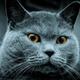 Аватар пользователя GrayKoT