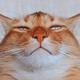 Аватар пользователя Ortezo