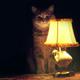 Аватар пользователя Koschsk88