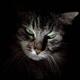 Аватар пользователя Krusolow
