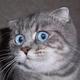 Аватар пользователя railly