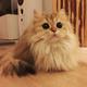 Аватар пользователя mr.kotya