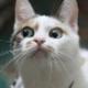 Аватар пользователя CherGuevara