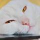 Аватар пользователя mass68