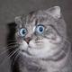Аватар пользователя ToString