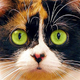 Аватар пользователя DDTT