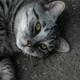 Аватар пользователя Acer897