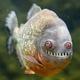 Аватар пользователя Robocip