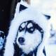 Аватар пользователя ALaskA91