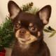 Аватар пользователя cleverchihuahua