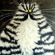 Аватар пользователя pingvin4ik2019
