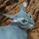 Аватар пользователя babkaTsunade