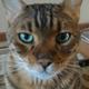 Аватар пользователя alenka74