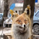 Аватар пользователя VolandeMorti