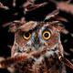 Аватар пользователя MaggyThatcher