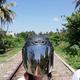 Аватар пользователя SriLanka